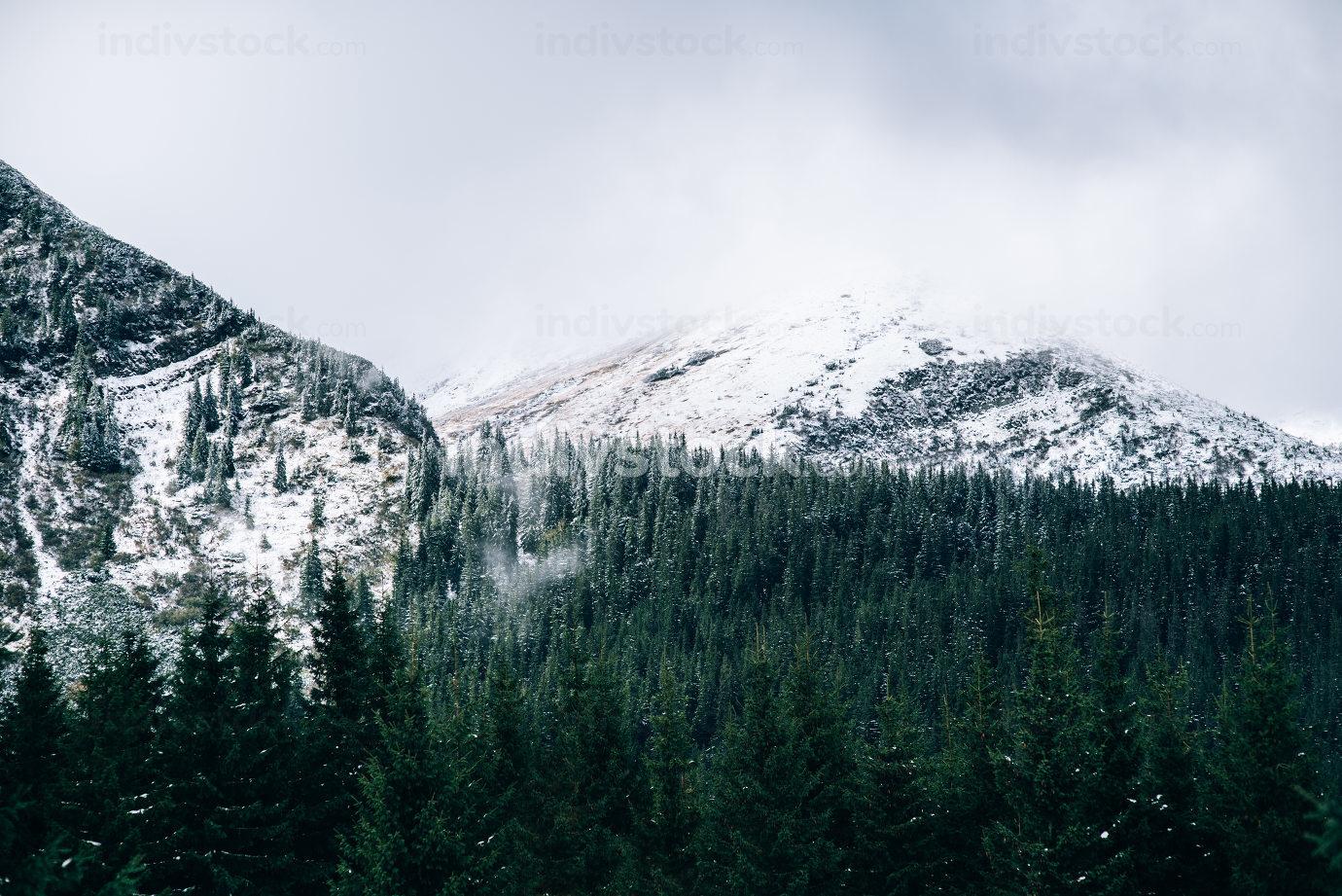 winter landscape in the Carpathian mountains