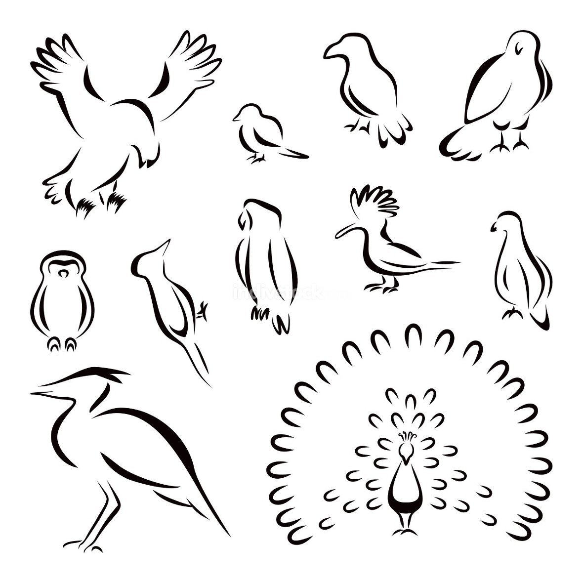 Collection of different birds black icons