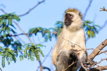 A monkey sits on the branch of a tree