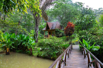 A small wooden bridge over a small river in a rainforest in Mada