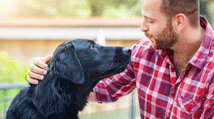 An image of a bearded man with labrador retriever friendship