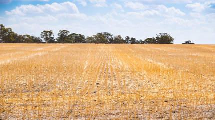 dry field in South Australia