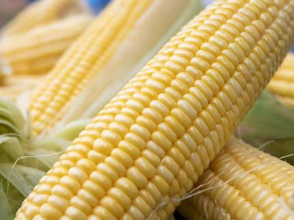 Freshness raw maize with peeled