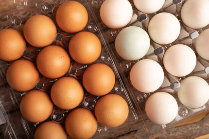 full frame eggs of chicken and duck