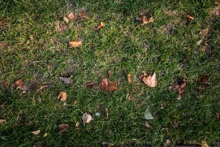 Green grass seamless texture. Seamless in only horizontal dimens