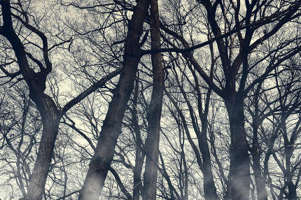 Horror foggy trees silhouettes wallpaper. Halloween mystery wood