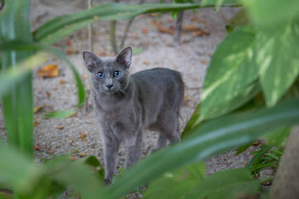 Small gray cat between the plants watching you