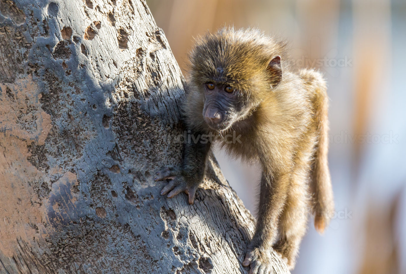 A little monkey is playing on a tree branch