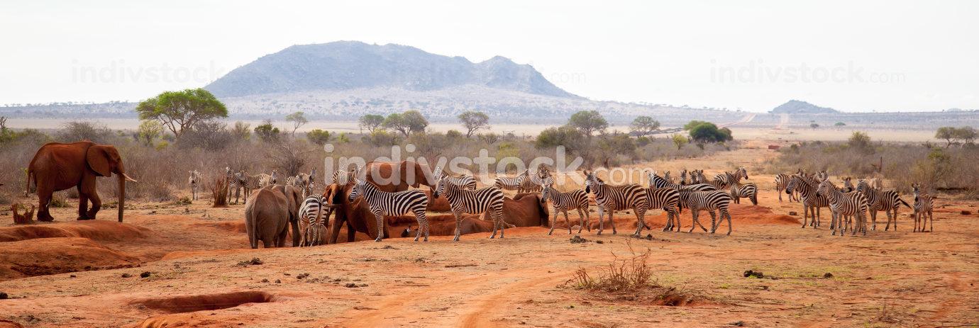 A lot of animals, zebras, elephants standing on the waterhole, K