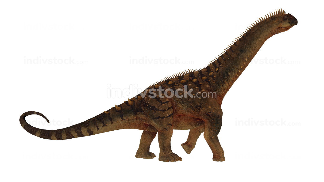 Alamosaurus dinosaur walking isolated in white background - 3D render