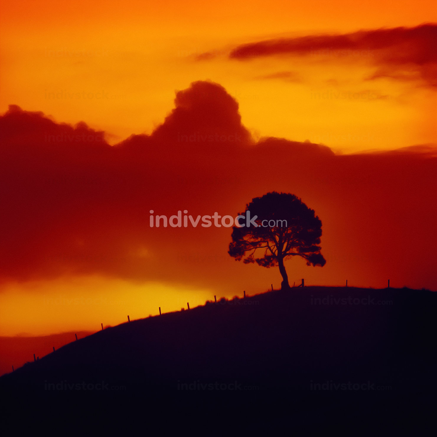 blurred sunset sky with tree