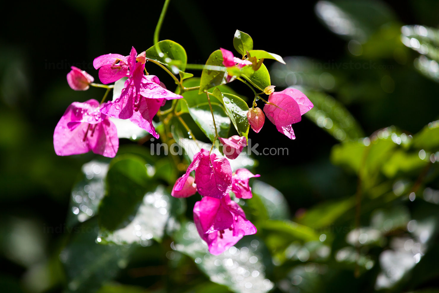 Colorful exotic flowers on trees with green leaves