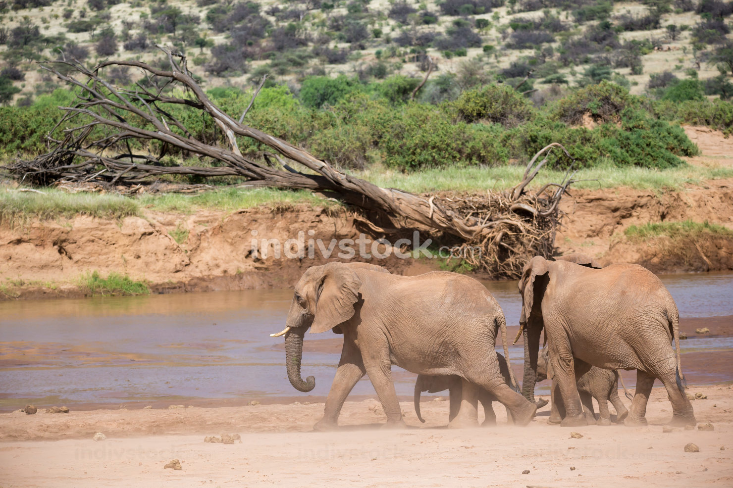 Elephant family on the banks of a river in the middle of the Nat