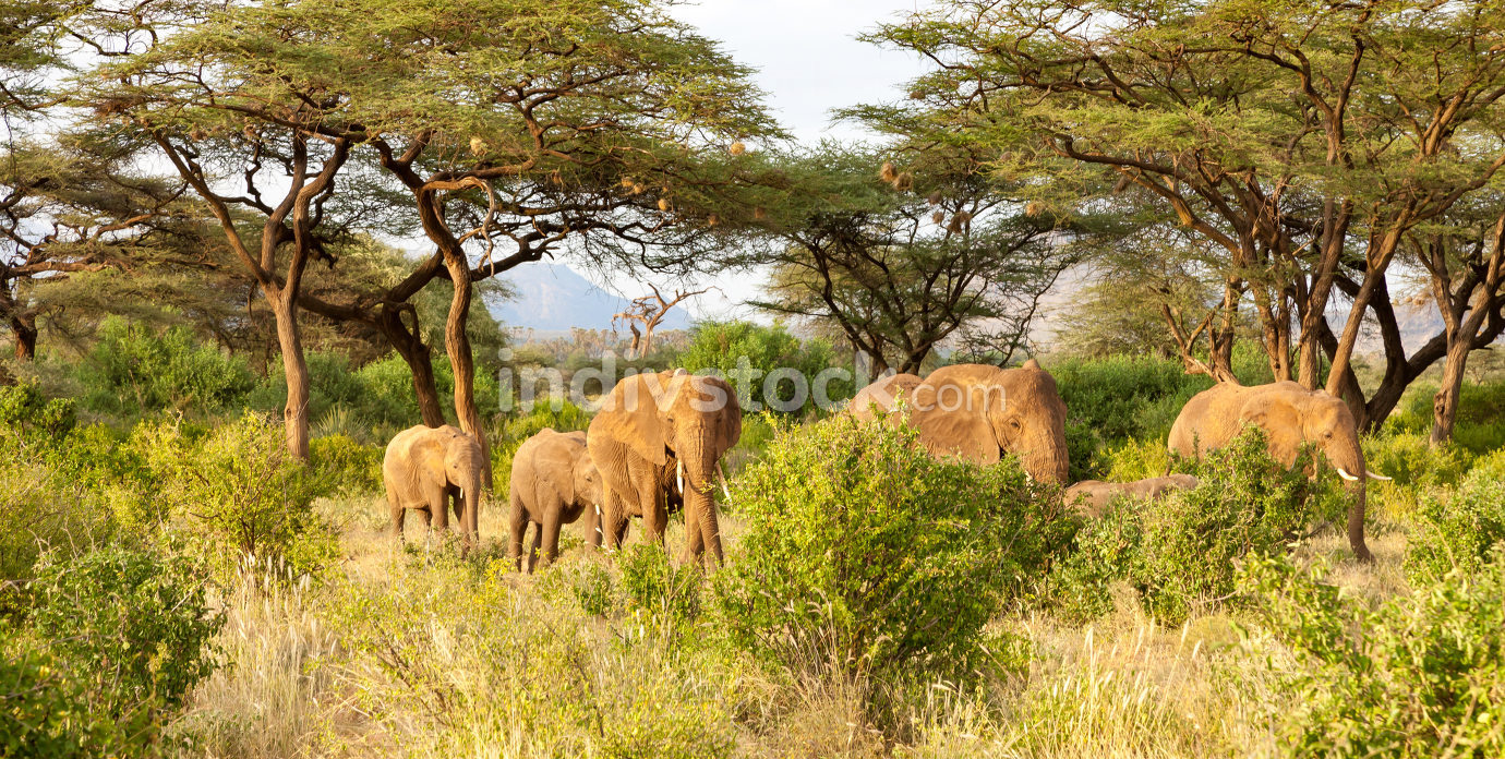 Elephants walk through the jungle amidst a lot of bushes