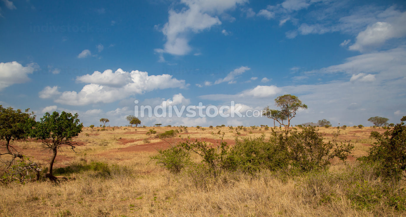 Landscape in Kenya, grassland with some trees and blue sky with