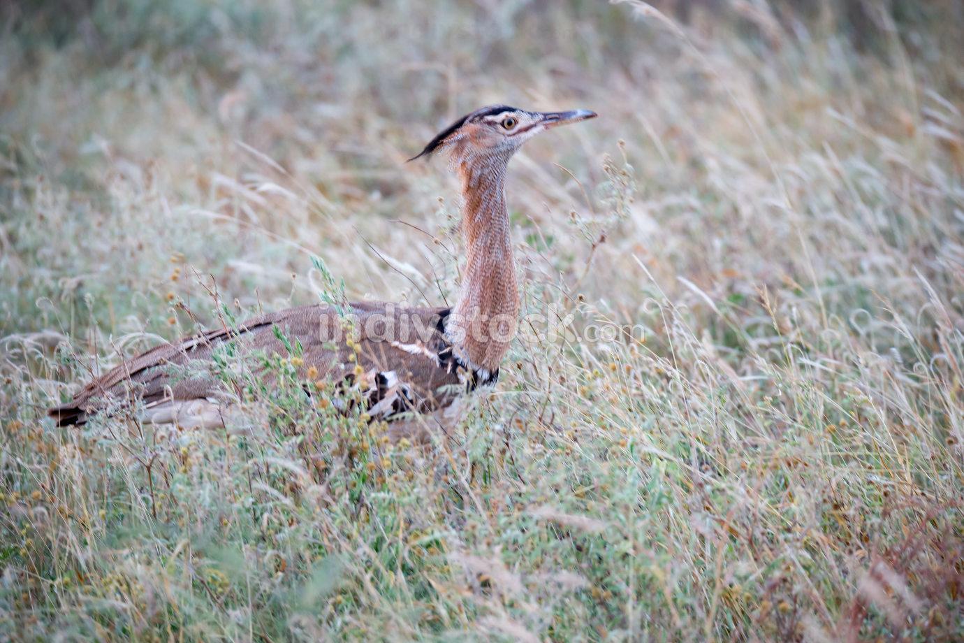 Local kenyan birds on the green bush