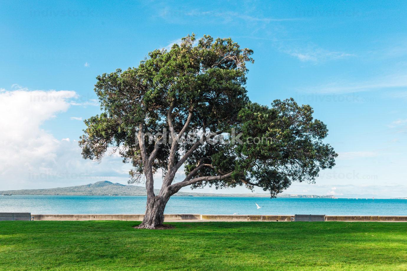 Green tree landscape near beach