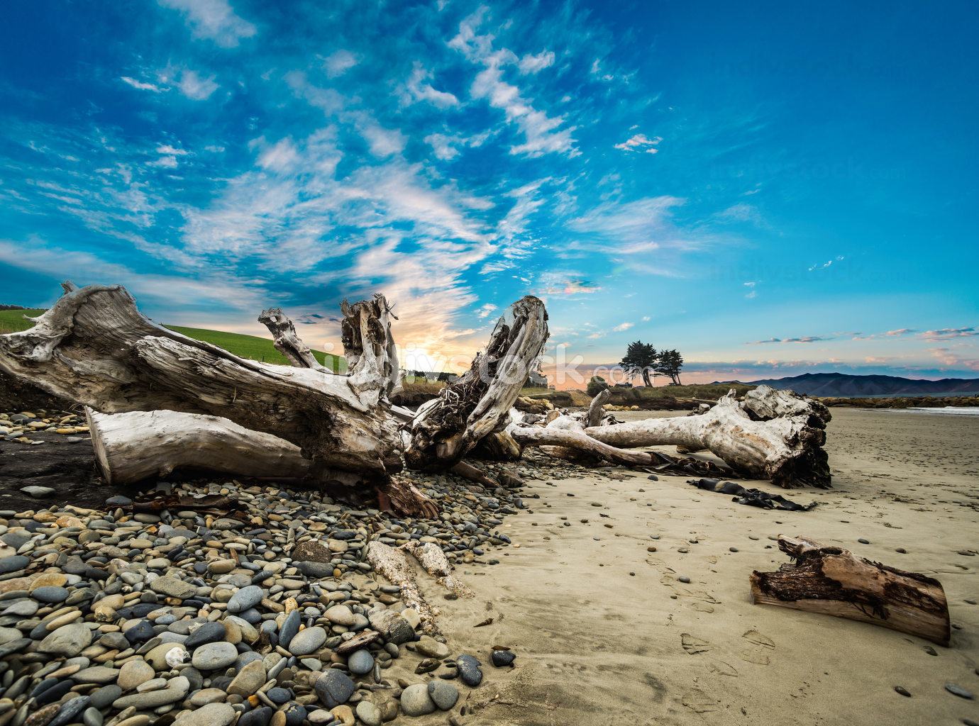 Tree/Leading Lines/A close up of a driftwood tree truck on the beach.