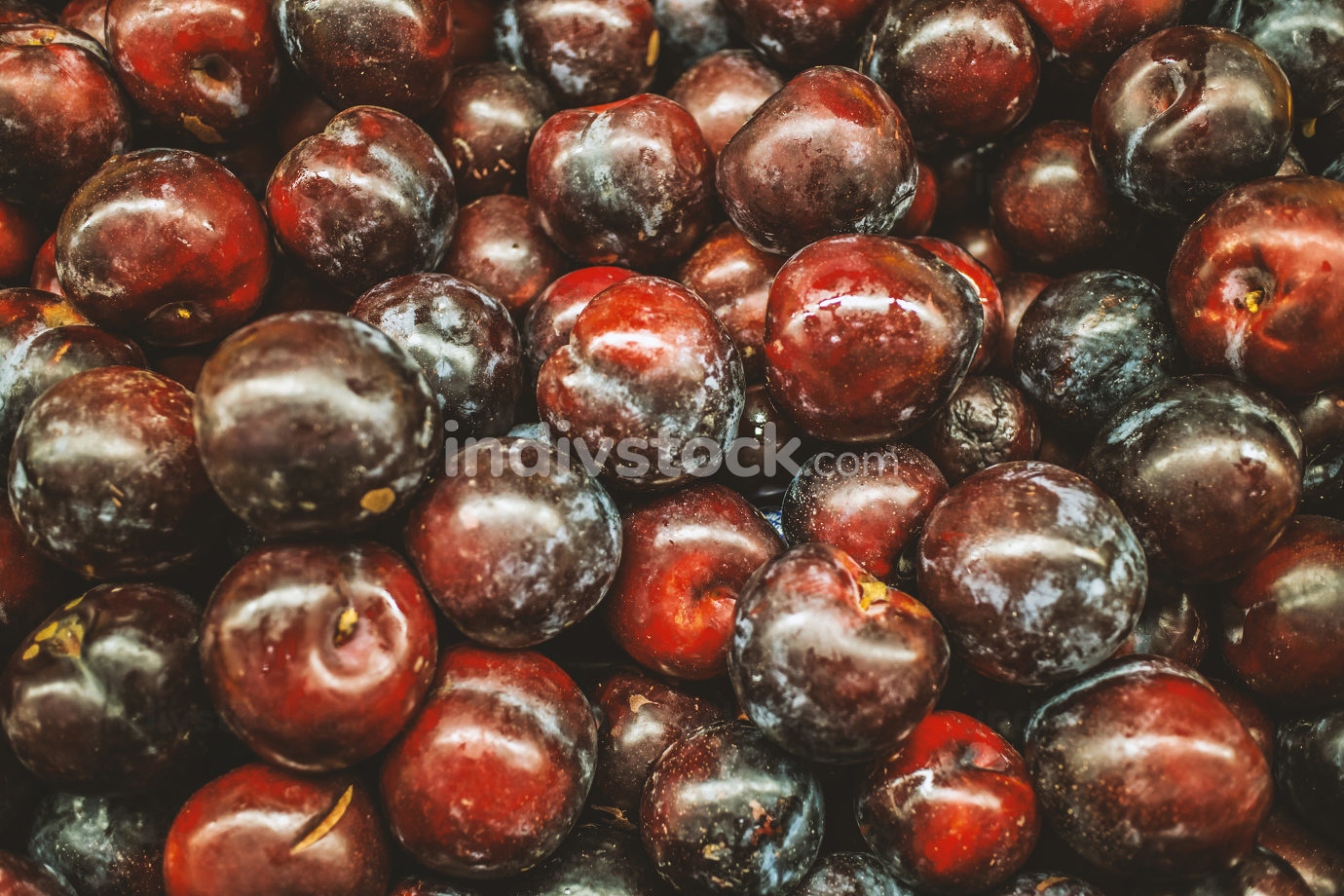 Ripe Plums (Blackthorns) Background, Texture