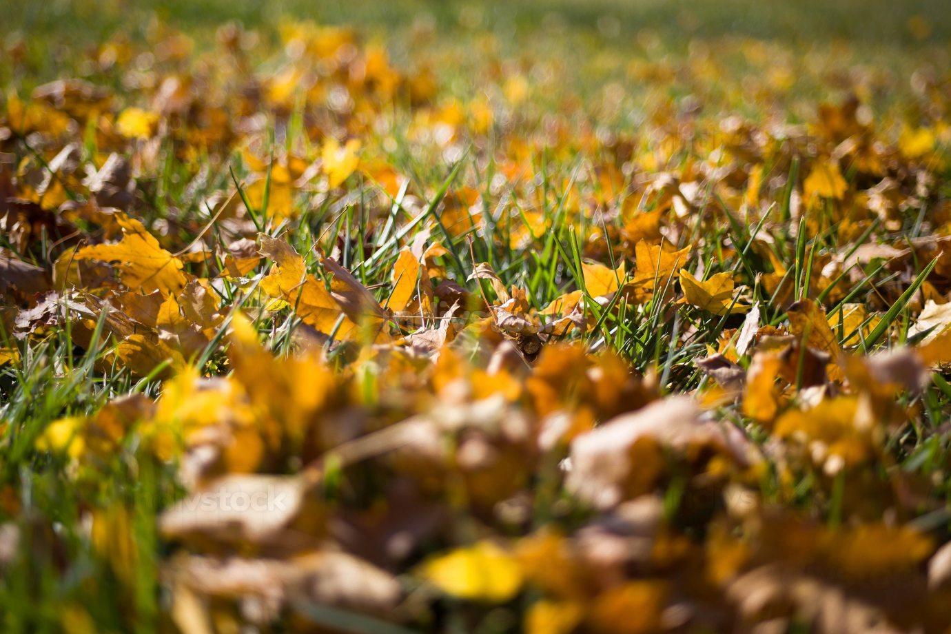 Season of beautiful autumn leaves