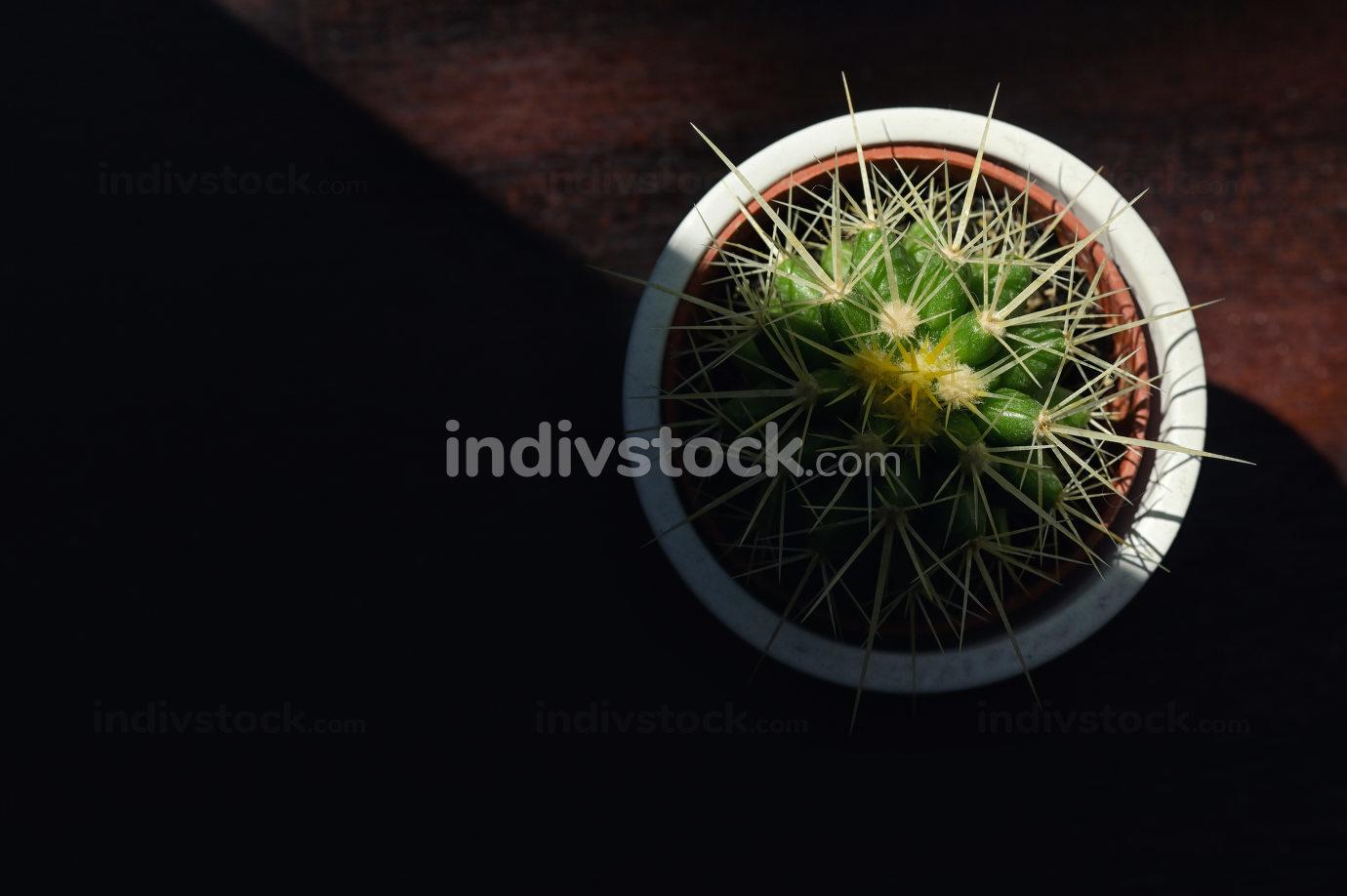 Single cactus plants and sunlight