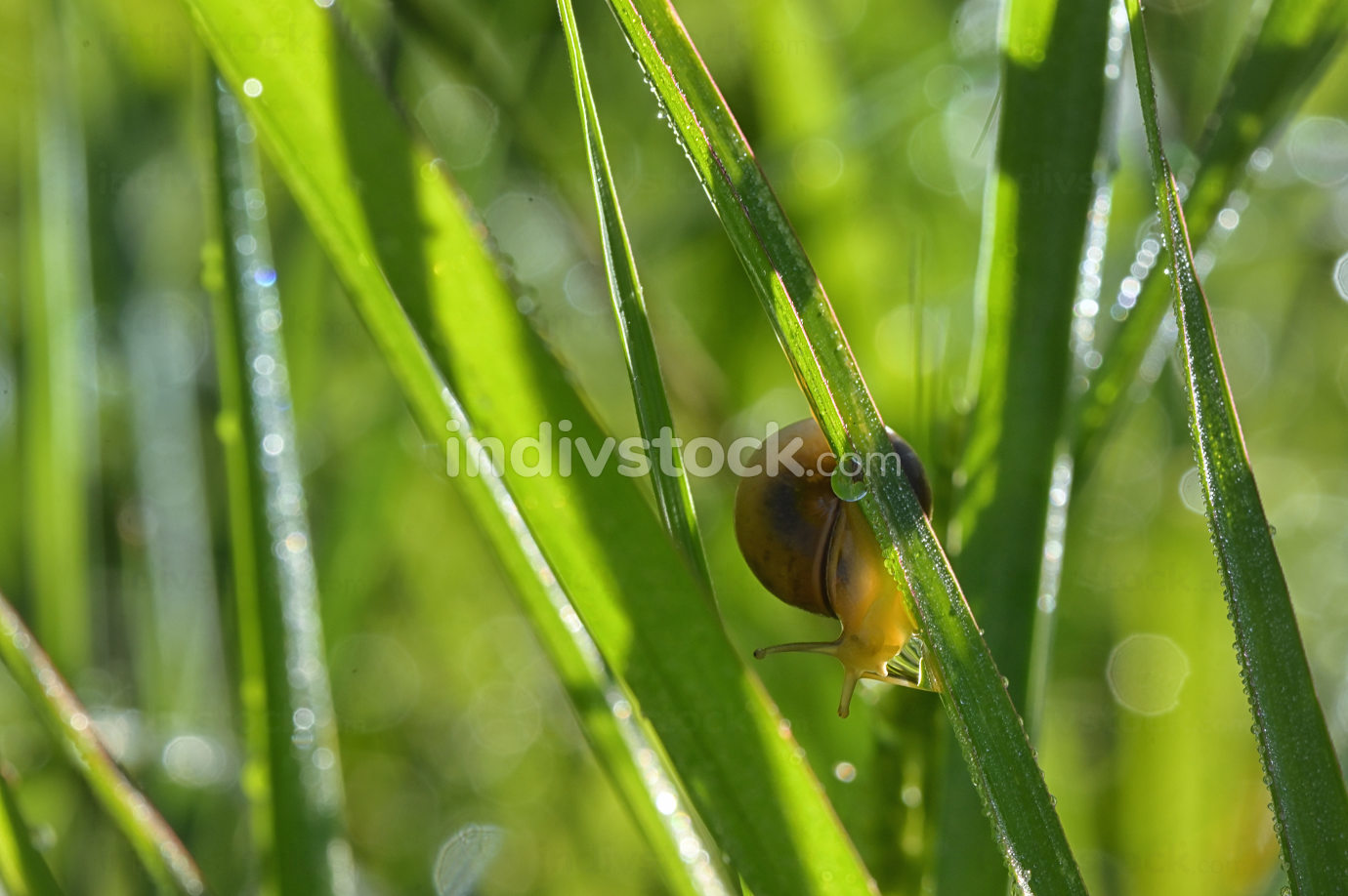 snail and dew drop in summer time