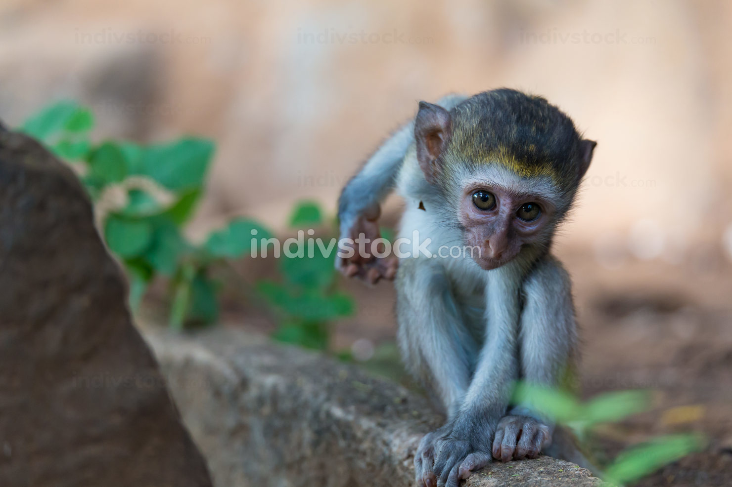 Thailand, A little funny monkey is playing on the floor or on the tree
