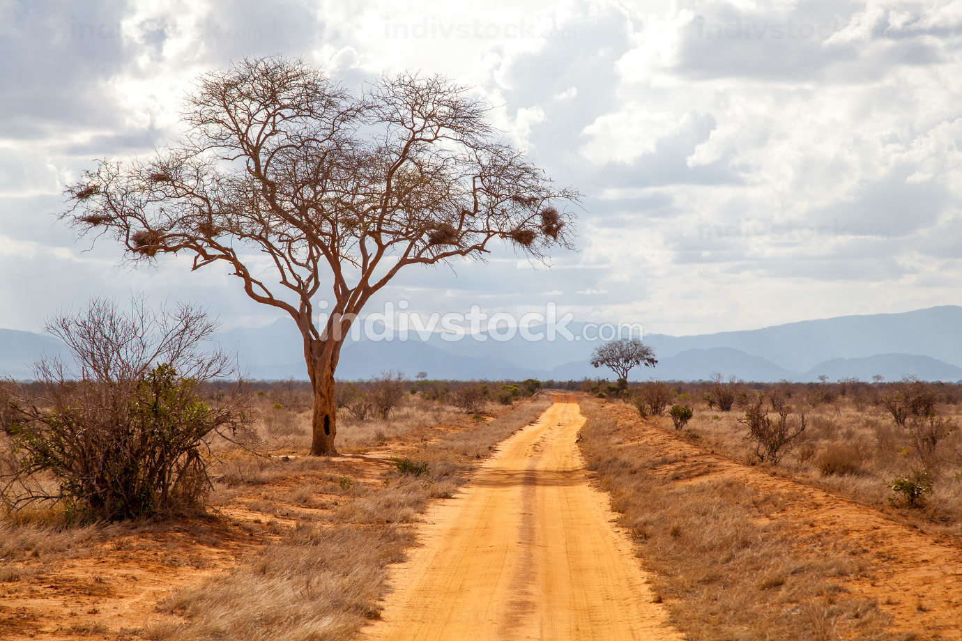 Tree by the road, red soil, hills in the far, Kenya