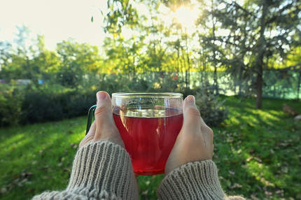 Hands hold Tea Cup in Nature
