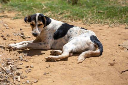 One street dog on the island of Madagascar