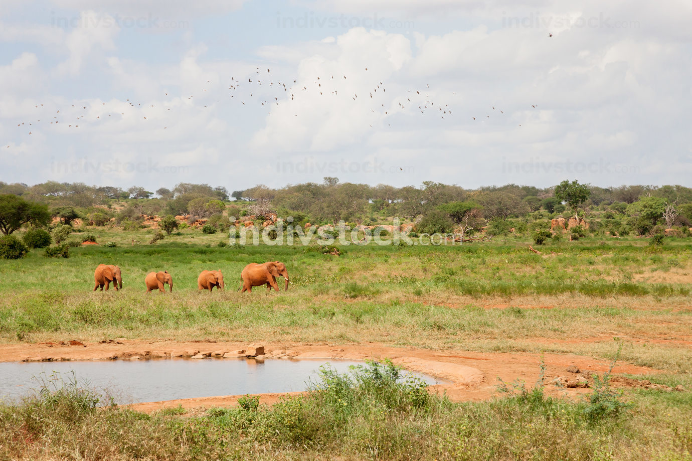 A elephant familiy is coming to the waterhole