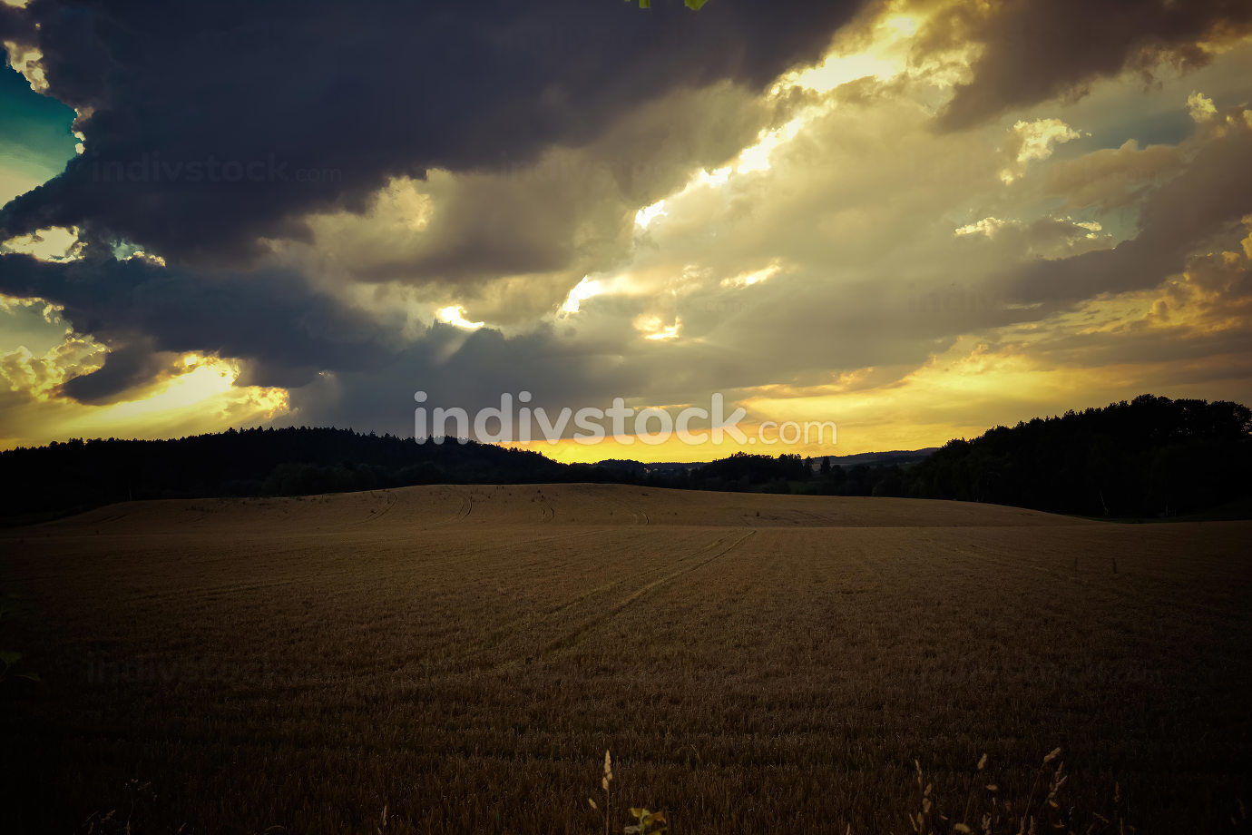 a field in autumn in the sunset
