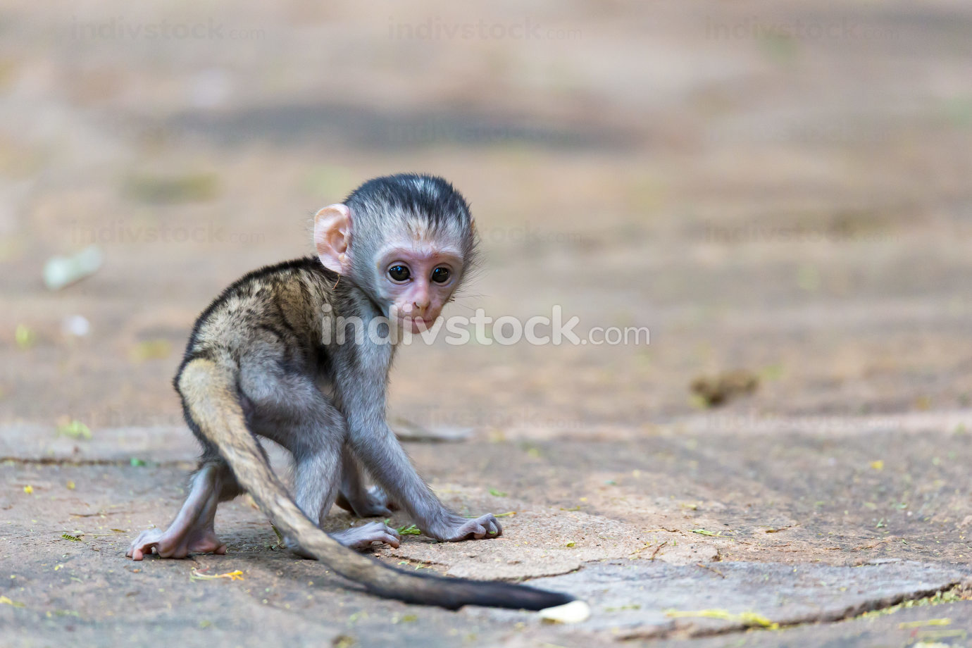 A little funny monkey is playing on the floor or on the tree