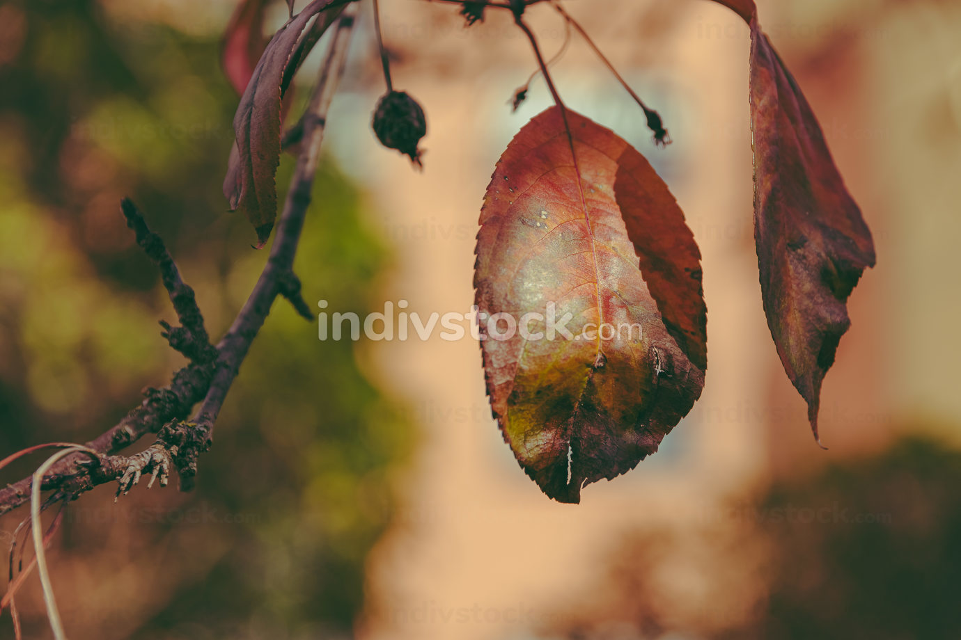 deciduous leaf on a branch in autumn