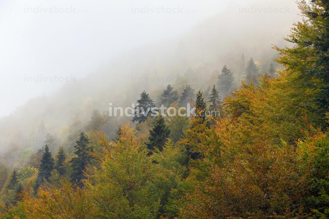 Foggy Forest in Zarnesti, Romania