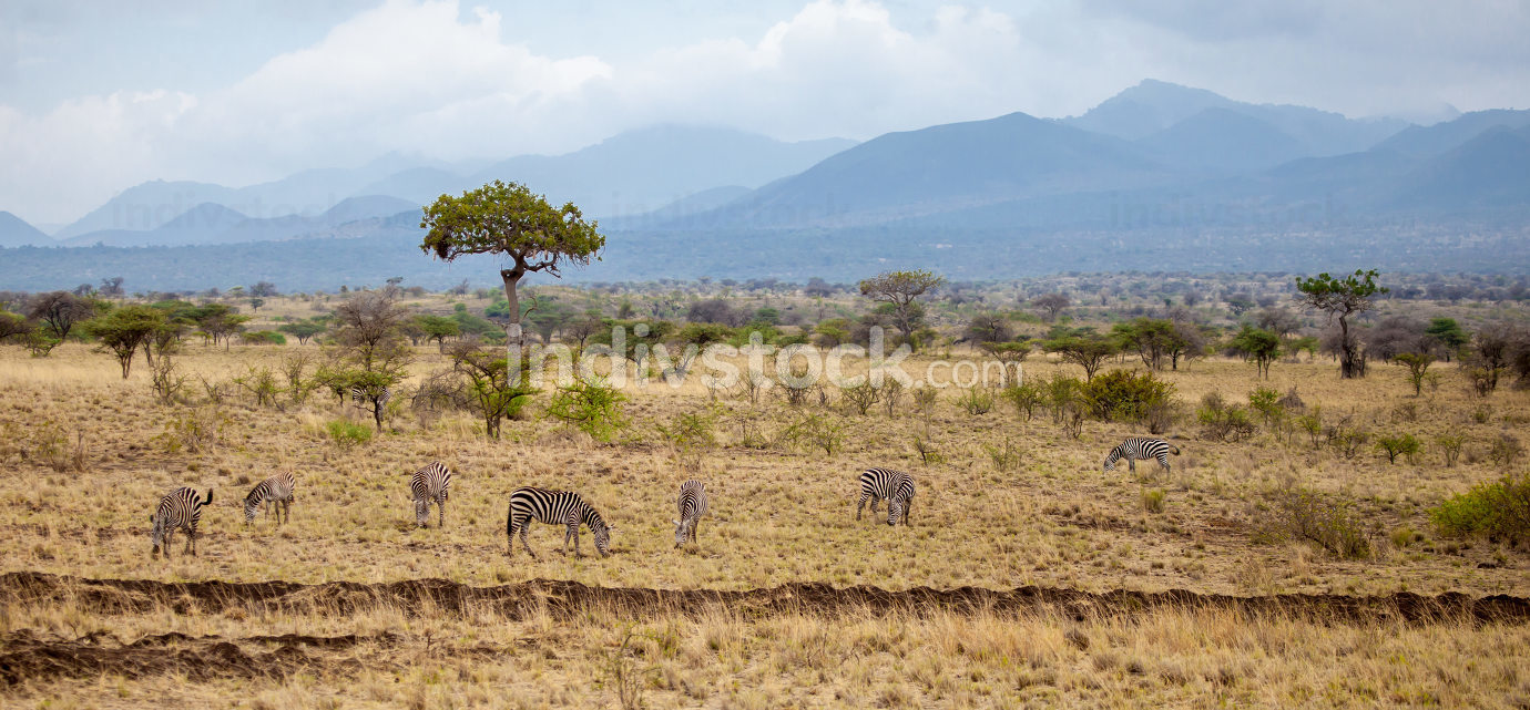 Landscape in Kenya, with animals, trees and hills