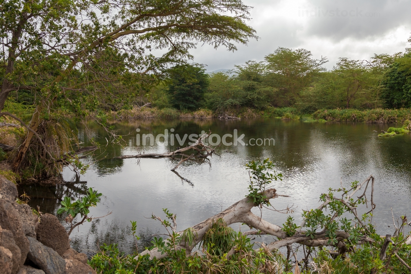 Landscape of Kenya, Mzima Springs with a lot of plant