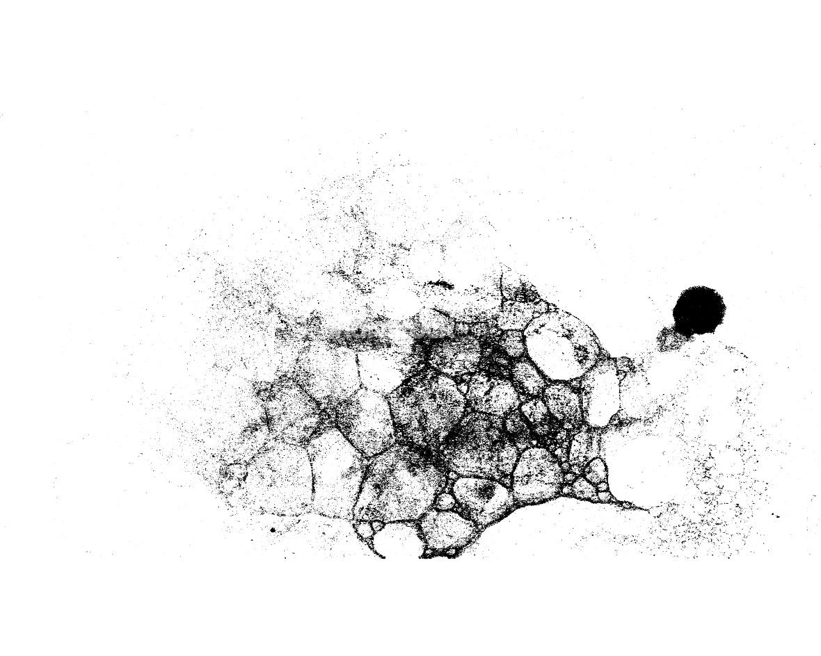 Vector grunge texture in black and white
