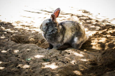 Rabbit, small mammal in a zoo park