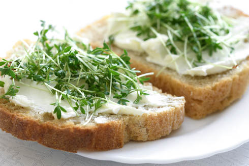 The idea for the simple and healthy breakfast-sandwiches with fresh home wholemeal bread with cottage cheese and Cress in close-up