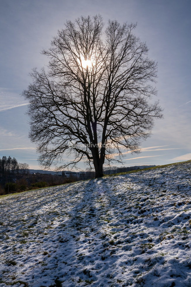 Beautiful tree with sunlight and shadows, wintertime at Bergisches Land, Germany