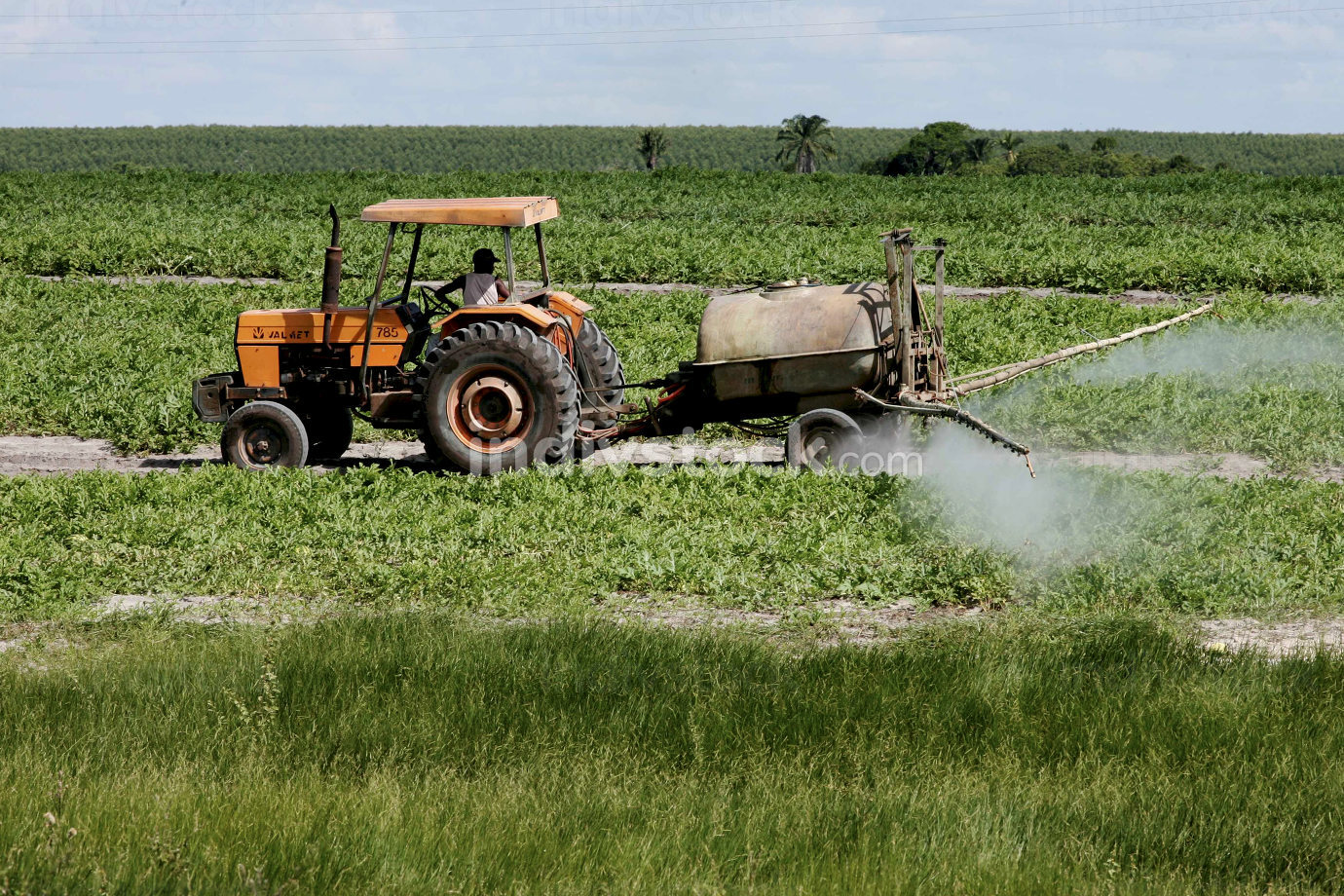 eunapolis, bahia Brazil, april 22, 2010, crop protection against crop protection, Tractor is seen during pesticide spraying on watermelon plantation in Eunapolis City.