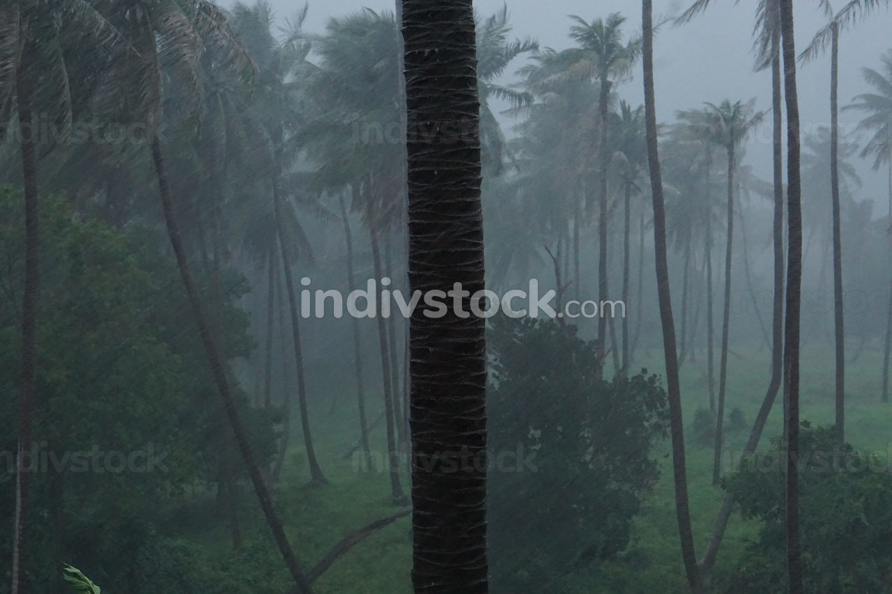 rainy storm, strong wind blowing in the early evening on the island Koh Tao in Asia, Thailand, in the month May. Nature view