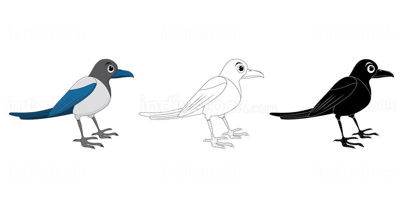 Magpie bird cartoon illustration set . Standing crow animal orni