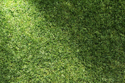 Beautiful green grass texture with sun beam